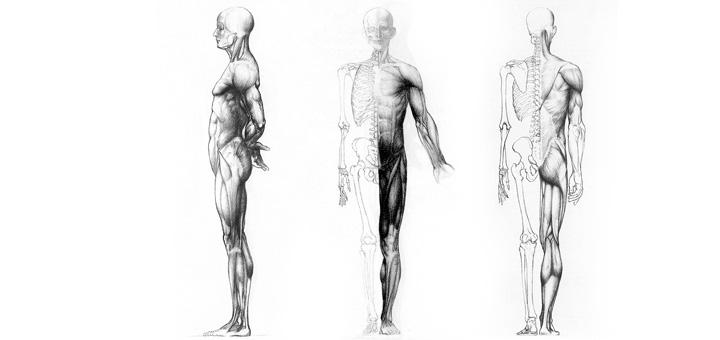 Основы рисования фигуры человека