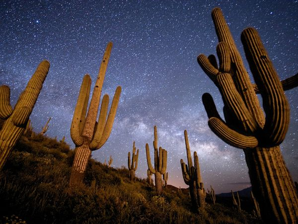 saguaro-arizona-richardson_63204_600x450