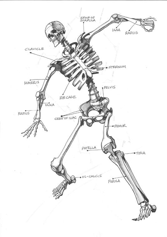 детали скелета