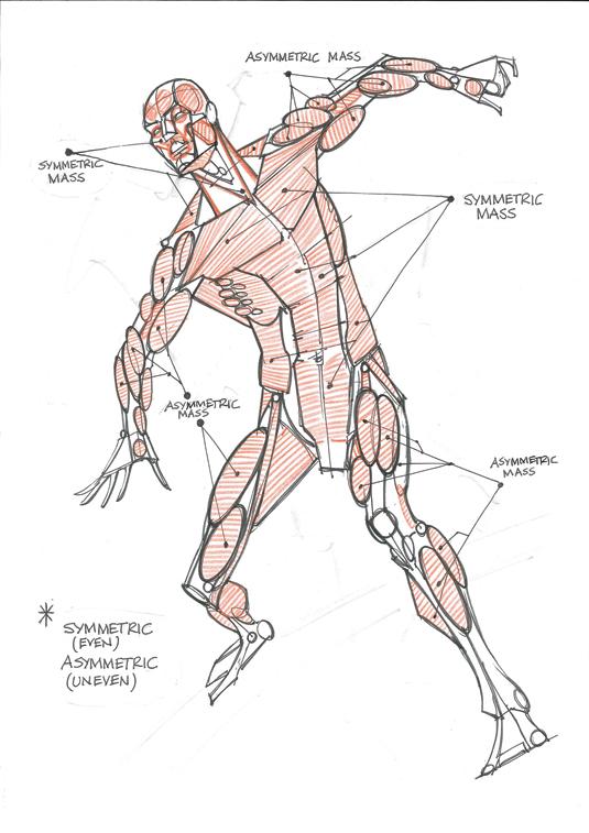 Обобщение анатомии