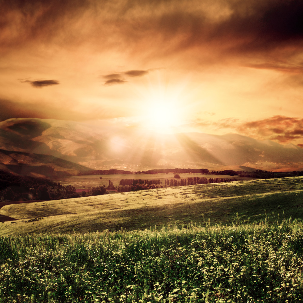 Summer morning on the meadow, natural backgrounds