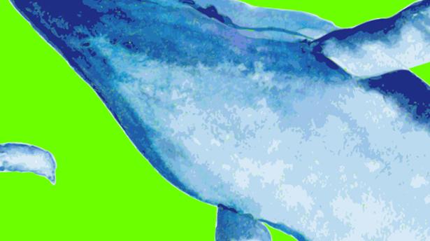 Три кита фотографии @ Fedoriv Hub | Киев | город Киев | Украина