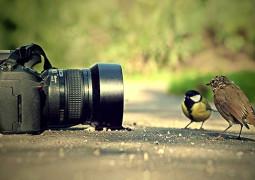 Обзор: какой фотоаппарат выбрать?