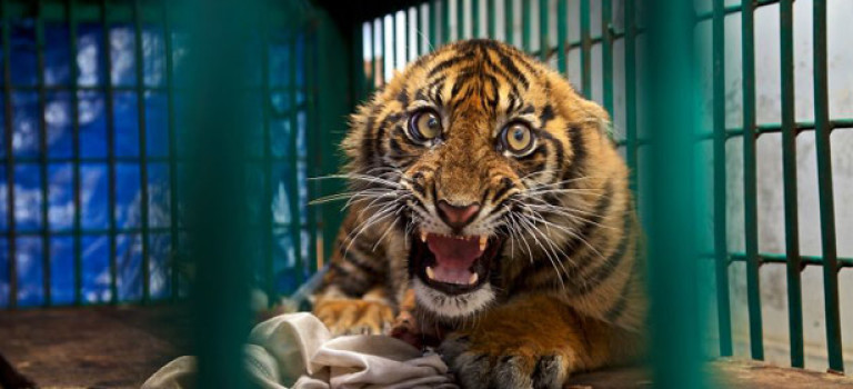 13 лучших фотографий дикой природы в 2017
