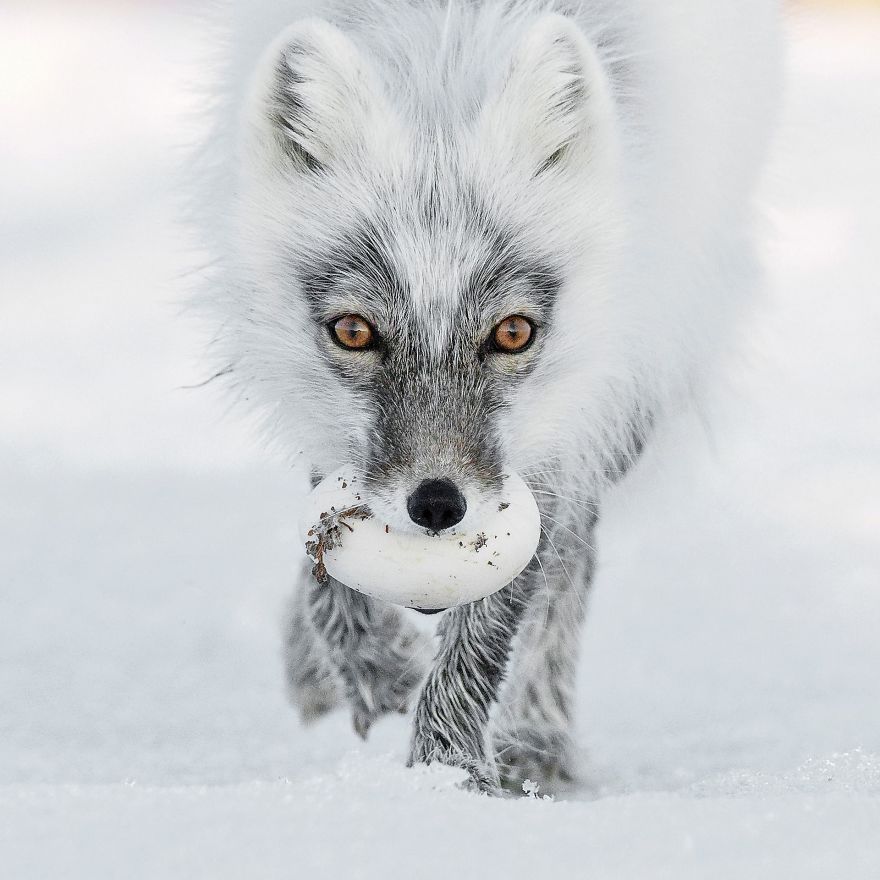 best-wild-photo_1