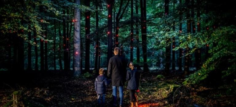 Голландские художники установили «цифровой организм» в лесу