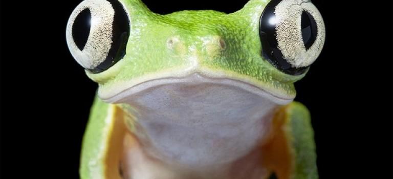Endangered: потрясающие фотографии животных, находящихся на грани вымирания