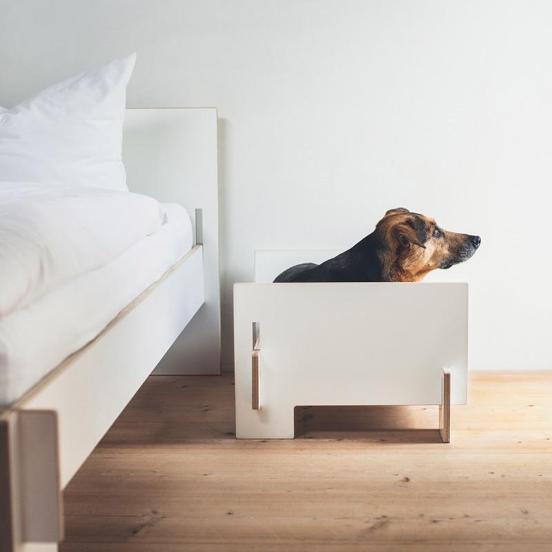 dog_8