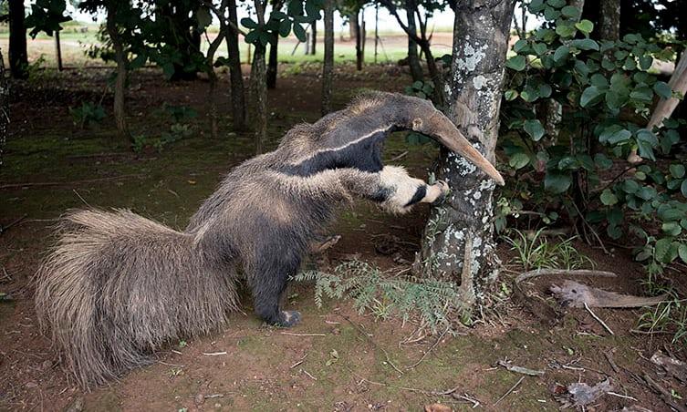 fake-anteater-1