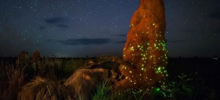 Победитель Wildlife Photographer of the Year был дисквалифицирован за подделку