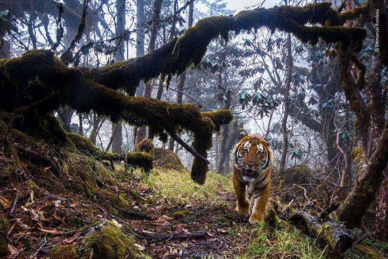 Wildlife-photo-11