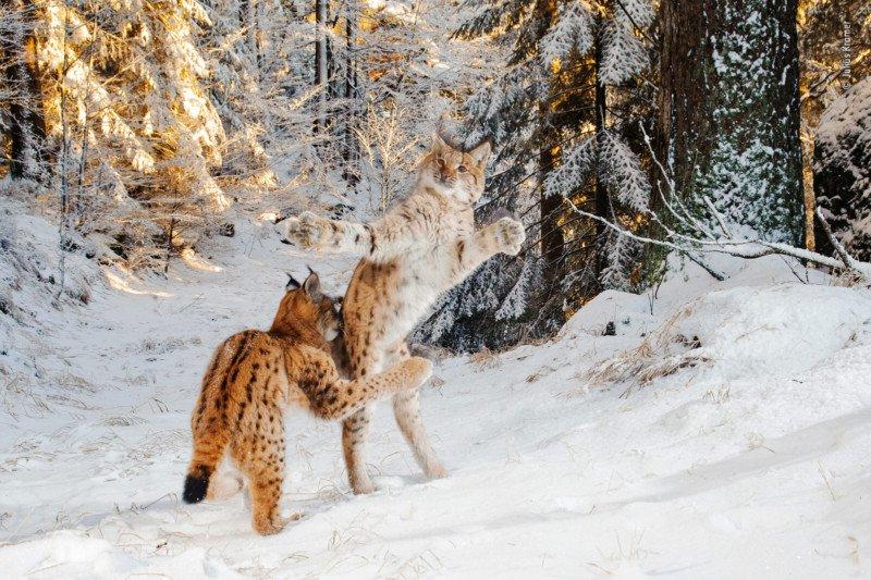 Wildlife-photo-14