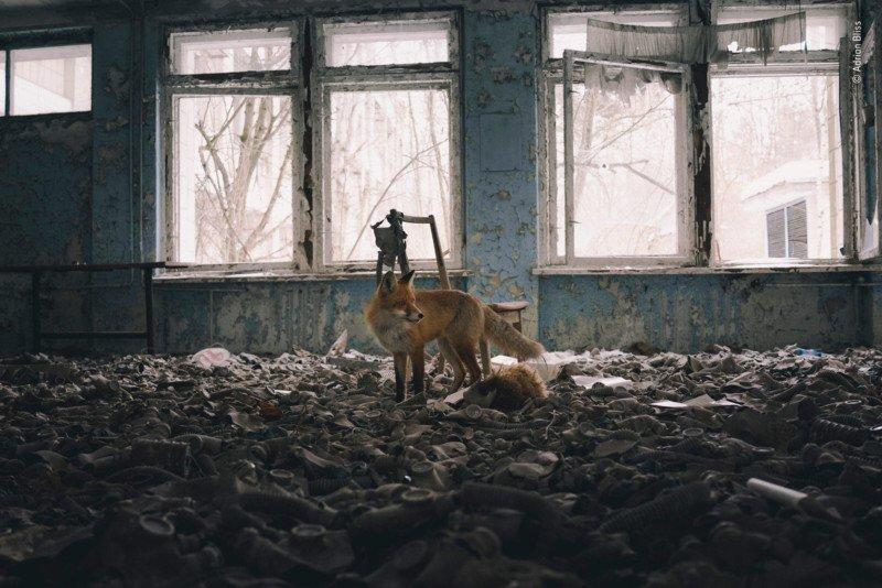 Wildlife-photo-7