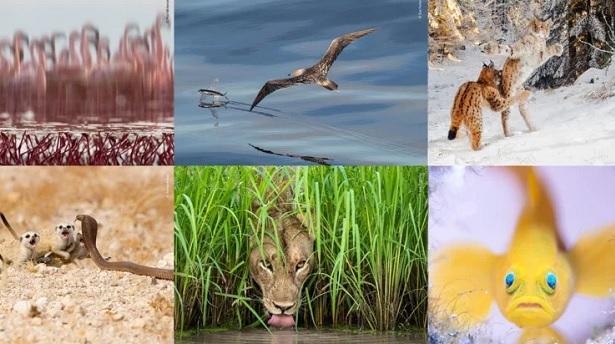 Wildlife-photo
